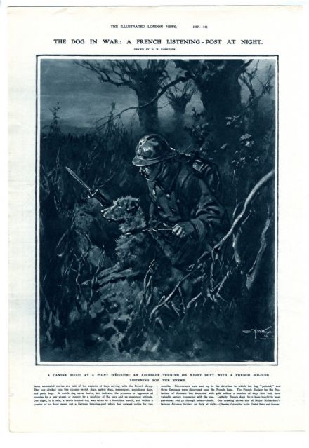 1917 Print WW1 AIREDALE TERRIER Major Richardson's War Dog NIGHT DUTY by H. W. Koekkoek